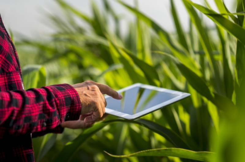 Compra online de insumos agrícolas