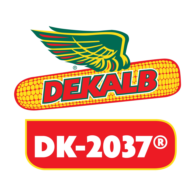 Semilla de Maíz DK-2037 Tratada Poncho