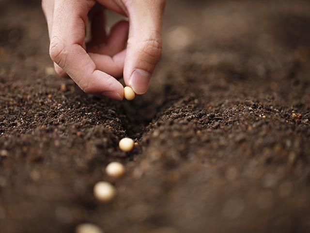 Tratamento de Sementes On Farm - Treine Consultoria