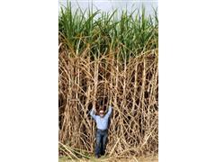 Agroespecialista - Ronaldo Cabrera - 1