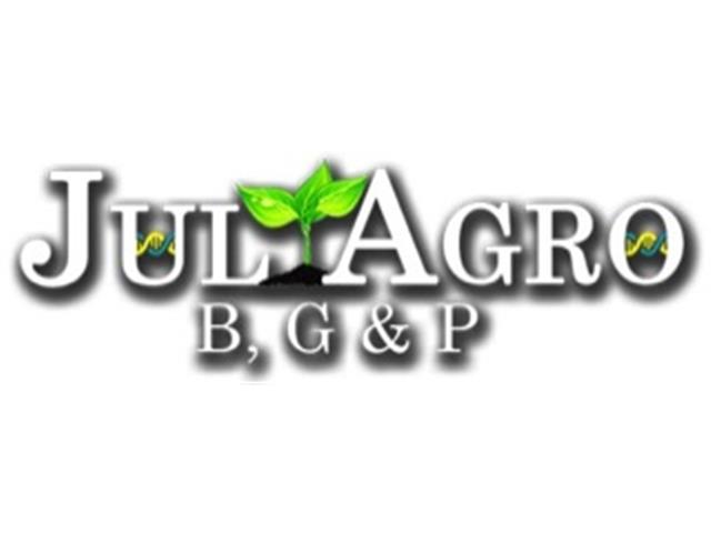 Consultoria em Detecção e Manejo Fitossanitário - Juliagro