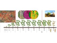 AD - Monitoramento através de Agrodigitalização - 3