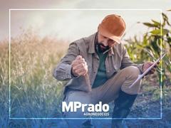 Consultora Customizada - MPrado - 0