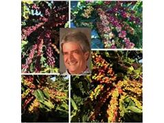 Agroespecialista - José Alberto Paranaíba - 0