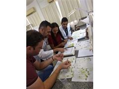 Qualidade Sementes e Produtividade - Prof. Dr. Rogério Coimbra - UFMT  - 5