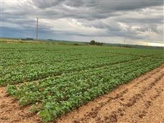 Agroespecialistas - Crops Team - 1