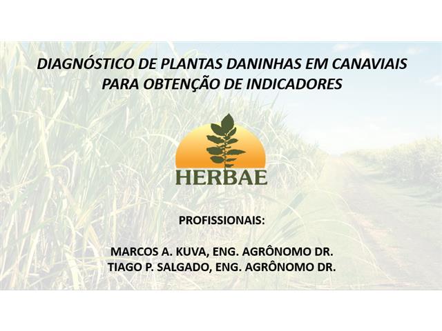 Diagnóstico de plantas daninhas em canaviais - Marcos Kuva