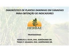 Diagnóstico de plantas daninhas em canaviais - Marcos Kuva - 0
