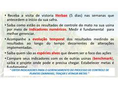 Diagnóstico de plantas daninhas em canaviais - Marcos Kuva - 1