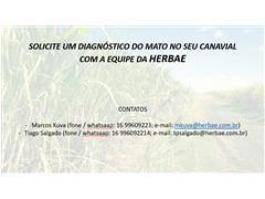 Diagnóstico de plantas daninhas em canaviais - Marcos Kuva - 6