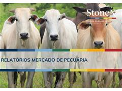 Relatórios para o Mercado de Pecuária - StoneX