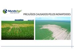 Nematoide - Mapeamento - 1