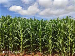 Eficiência Agronômica Safra 2020/2021 - Cerrado Pesquisas