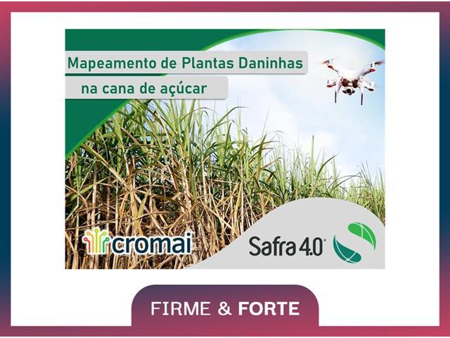 Mapeamento de Plantas Daninhas em cana-de-açúcar – Safra 4.0