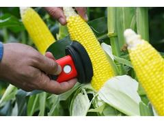 Espectrômetro SCIO - análise rápida de umidade do milho - Israel Agro - 2