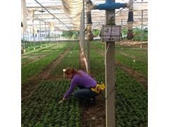 Irrigafácil Pitaya com Timer - 2
