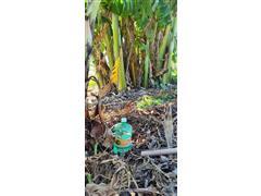 Indicador de Irrigação Intensa Pitaya Tensão de Água no Solo de 5 kPa - 3