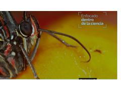 Diplomado online Fundamentos en biología de plagas - INST. ENTOMA
