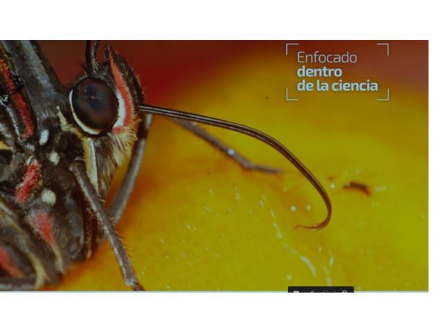 Diplomado online Control químico de plagas - INST. ENTOMA