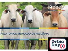 Relatórios para o Mercado de Pecuária - StoneX - 0