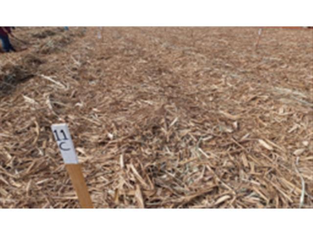 Ensaio de eficácia e seletividade de herbicidas - F&S