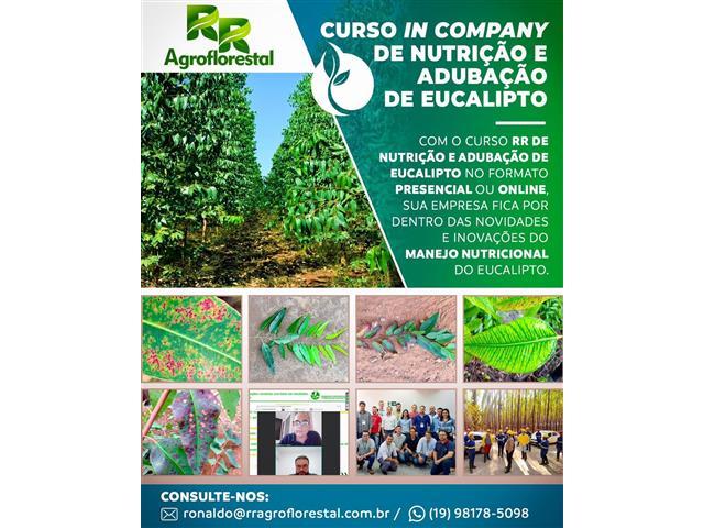 Curso de Produção de Mudas de Eucalipto - RR AGROFLORESTAL