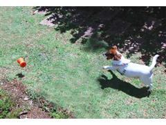 Bolinha Emaranhada Multilaser PP183 PET com Petisqueira de Borracha - 2