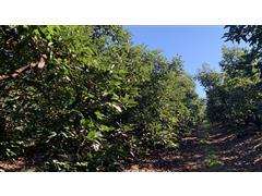 Treinamento e Orientação em Produção Agropecuária Sustentável - Hatten - 0